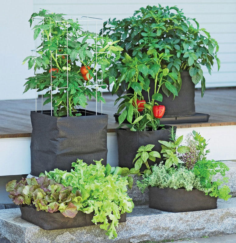 grow bags tomatoes peppers herbs and potatoes the. Black Bedroom Furniture Sets. Home Design Ideas