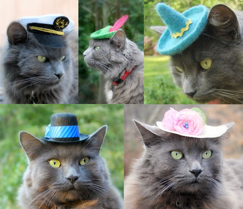 Hats For Cats The Green Head