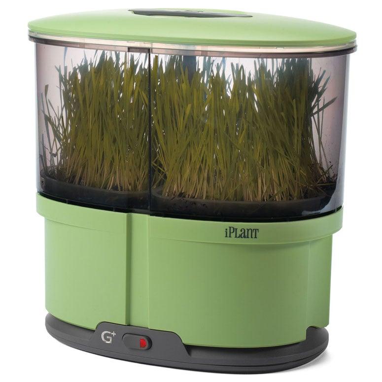 iPlant Indoor Sprout Garden The Green Head