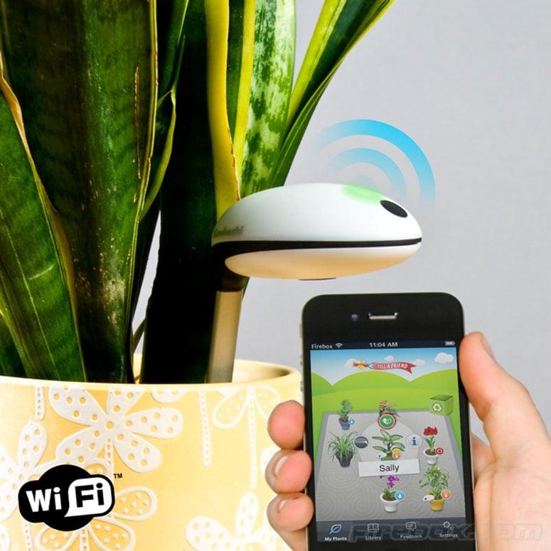 Koubachi Wi Fi Plant Sensor The Green Head
