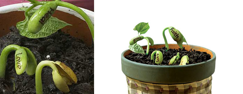Magic Wish Beans - Sprouts Reveal Secret Messages