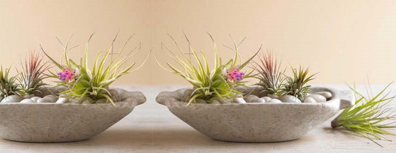 Magical Air Plant Garden