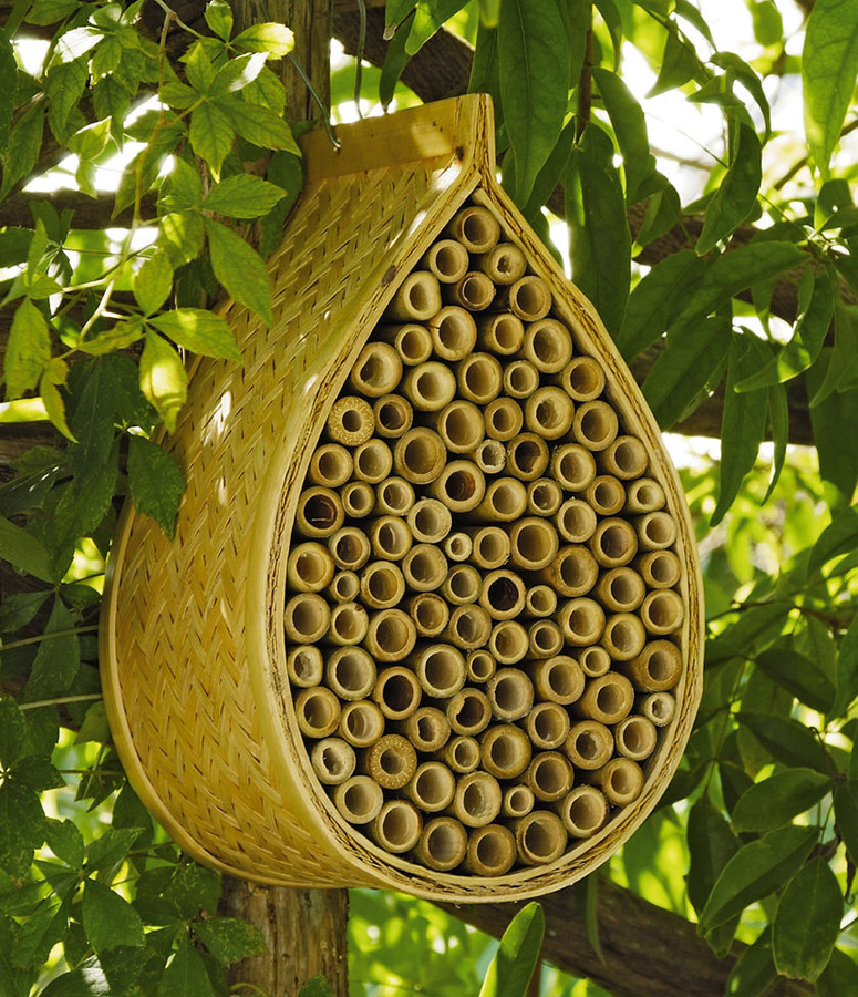 Mason Bee House Attract Nature S Best Non Stinging