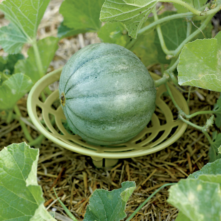 Melon and Squash Garden Cradles