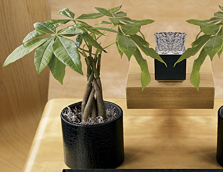 Money Tree Plant in Croc-Embossed Leather Pot