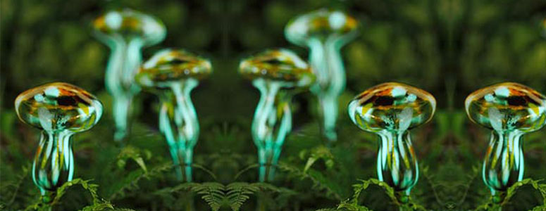 Moonlight Mushrooms Glow In The Dark Watering Spikes
