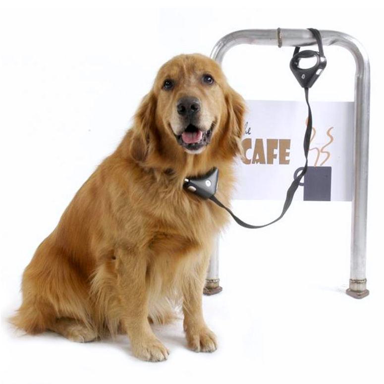 PAWZ Safespot Locking Dog Leash