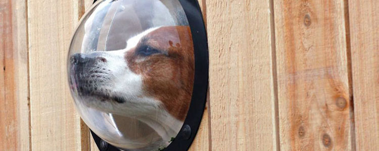 Pet Observation Porthole For Fences