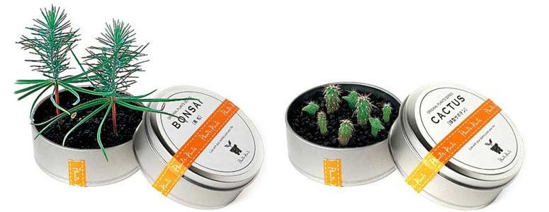 Plants In Cans   Cool Mini Desktop Gardens