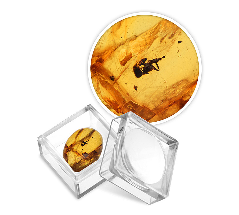 Prehistoric Insect In Amber