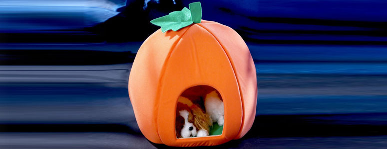 Pumpkin Pet House The Green Head
