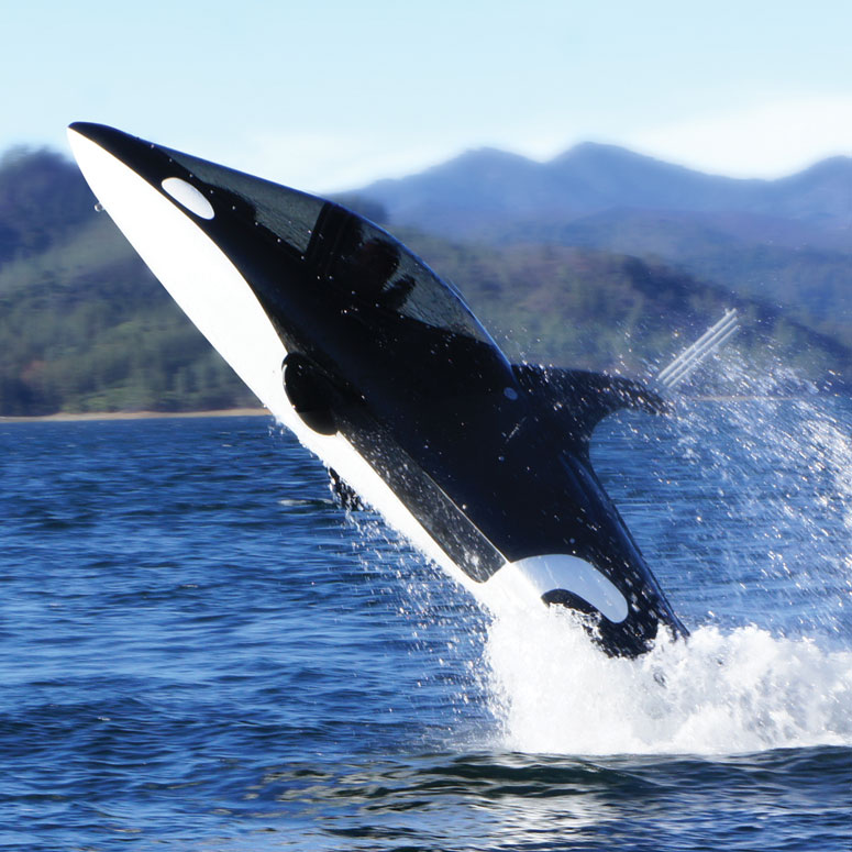 Seabreacher Y - Killer Whale Personal Submarine