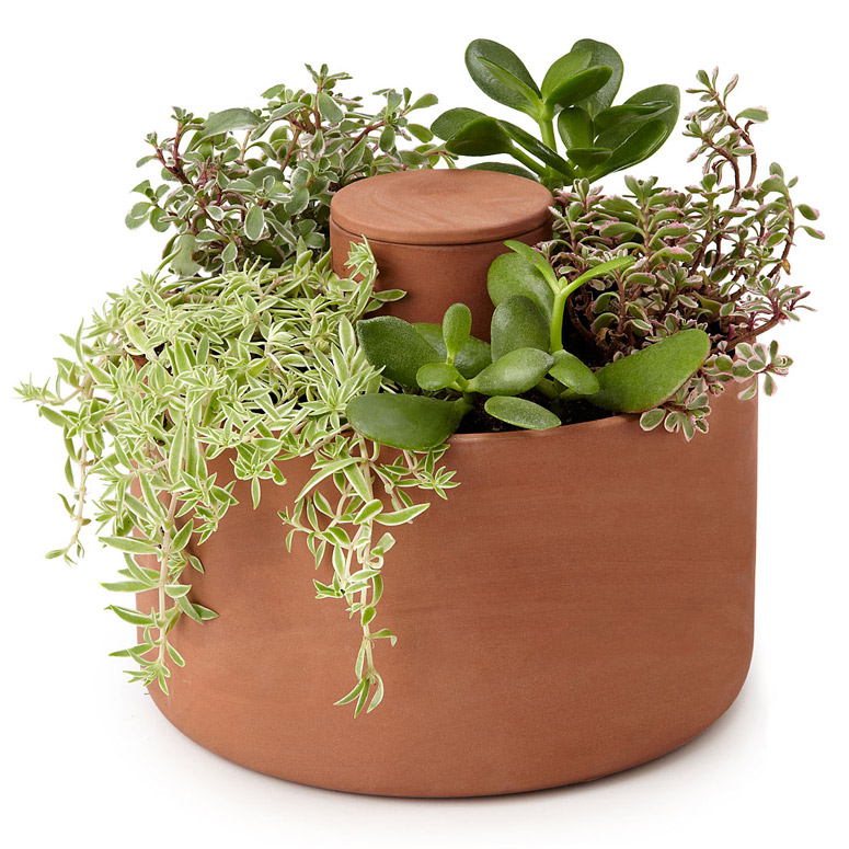 Self-Watering Herb and Succulent Planter