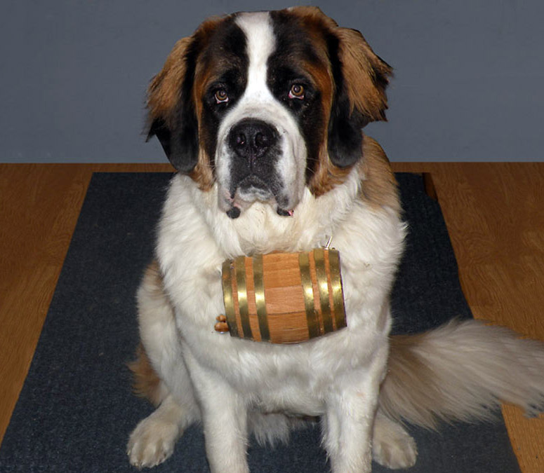 St Bernard Barrel Collars The Green Head