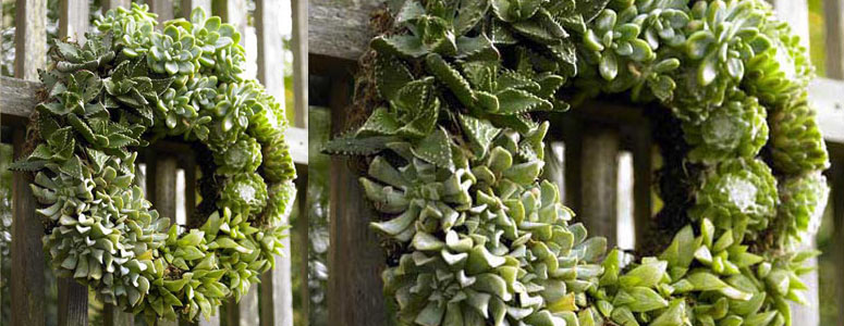 Succulent Living Wreath