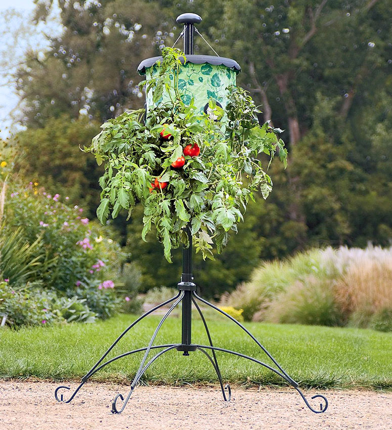 Super-Size Topsy-Turvy Upside-Down Tomato Tree