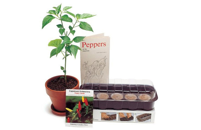 Tabasco Pepper Plant Kit Grow Your Own The Green Head