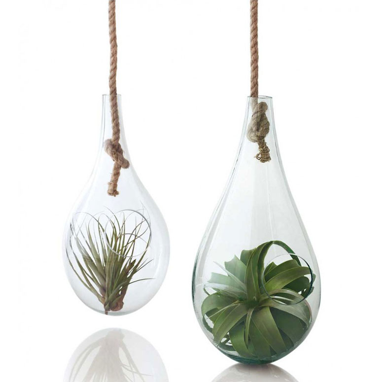 Teardrop Hanging Terrariums