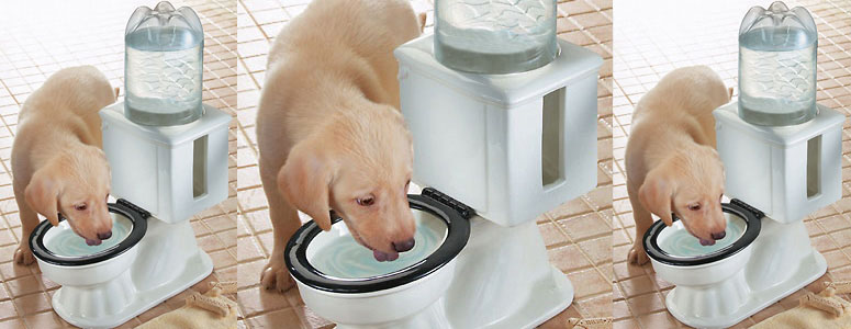 Toilet Dog Bowl