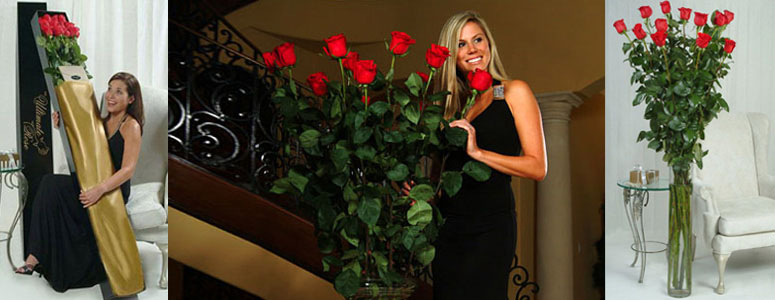 One Dozen of the World's Tallest Roses!