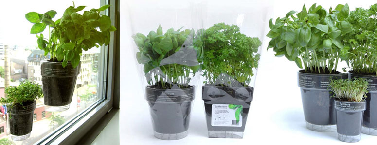 Windowherbs - Transparent Suction Cup Herb Pots