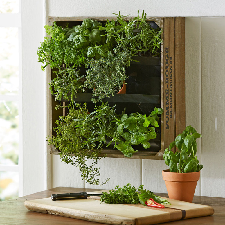 Wine Crate Vertical Wall Garden