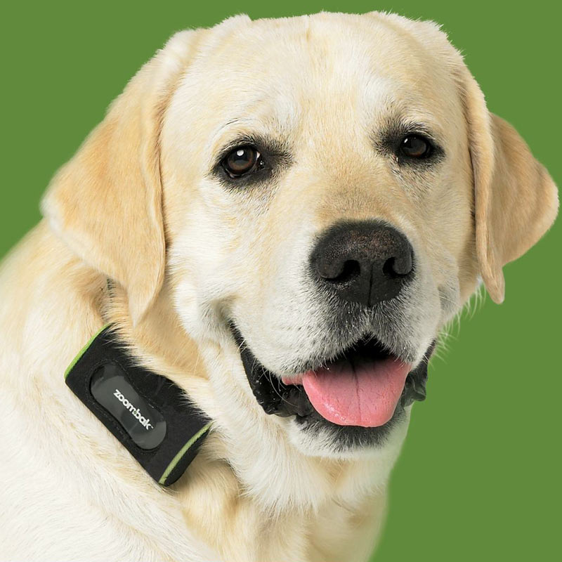 Zoombak Gps Dog Tracking System